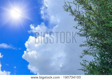Summer Sky Cloud Tree And Sunny Day.
