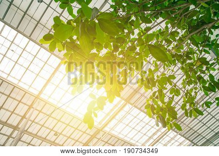 Green Eco Building Concept. Indoor Green Tree With Sun Roof For Clean Fresh Air And Low Energy Use.
