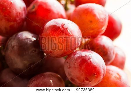Bunch of ripe fresh juicy red and pink grapes with water drops in sunlight bright colors summer fall harvest copy space