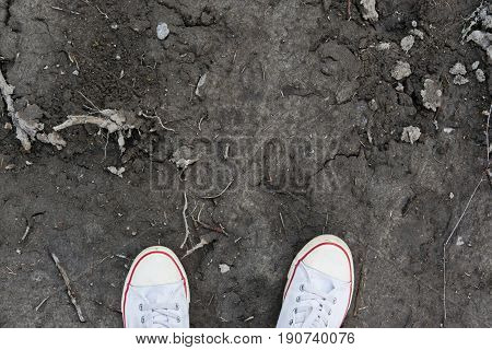 White sneakers standing on earth ground, soil texture.