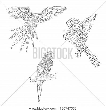 Vector illustration. Set of parrots flying parrots. Parrot sitting on a branch. Black and white line.