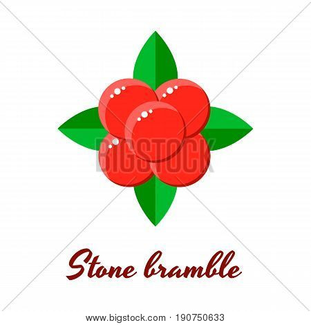 Vector Illustration, Stone Bramble, Forest Red Berries
