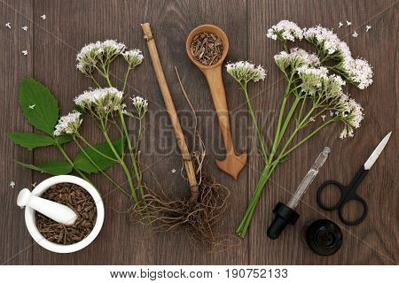 Valerian herb root and flowers with dropper bottle  and mortar with pestle over oak background. Used as an alternative to valium in natural medicine.