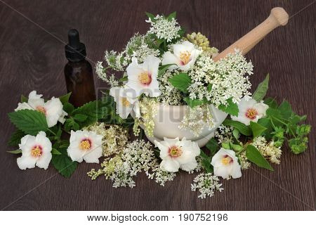 Medicinal flower and herb selection of orange blossom, ladies mantle, meadowsweet, queen annes lace, mint and angelica seed heads used in natural herbal medicine.
