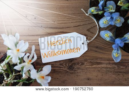 Sunny Label With German Text Herzlich Willkommen Means Welcome. Spring Flowers Like Grape Hyacinth And Crocus. Aged Wooden Background