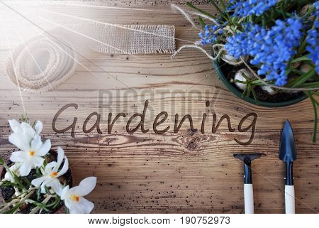 English Text Gardening. Sunny Spring Flowers Like Grape Hyacinth And Crocus. Gardening Tools Like Rake And Shovel. Hemp Fabric Ribbon. Aged Wooden Background