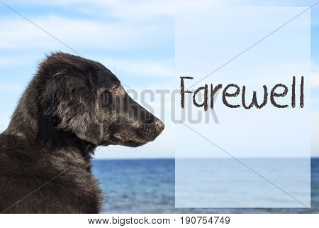 English Text Farewell. Flat Coated Retriever Dog Infront Of Ocean. Water In The Background