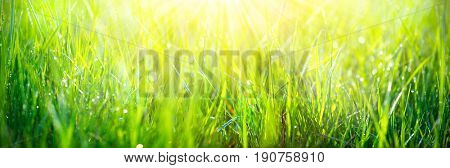 Grass. Fresh green spring grass with dew drops background, closeup. Sun. Soft Focus. Abstract Nature spring Background, springtime. Environment concept, lawn. Wide screen banner