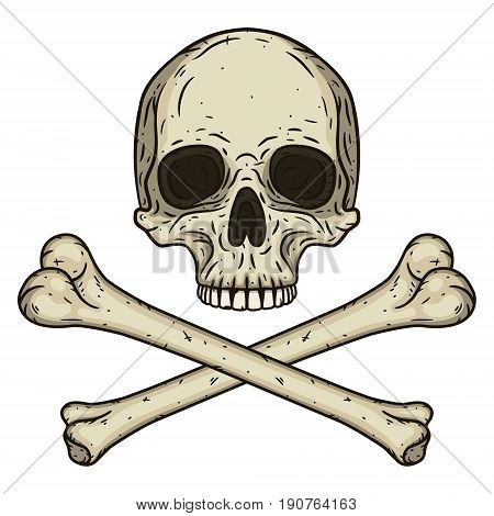 Human skull with two crossed bones isolated on white background. Vector illustration in hand drawn style