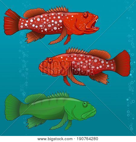 Common Harlequin Fish, cartoon Vector illustration for artwork in small sizes.