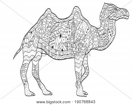 Vector coloring camel for adults illustration. Anti-stress coloring for adult animal. Zentangle style. Black and white lines. Lace pattern