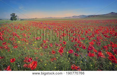 colorful flowers on field in summer, landscape