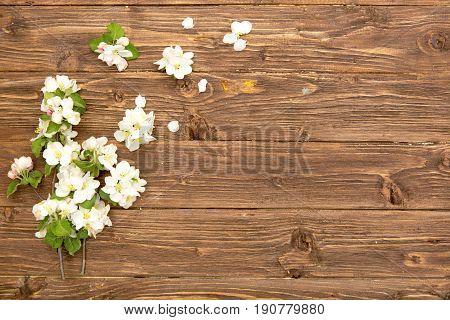 Spring Flowers Of Blossoming Apple Tree Branches On Rustic Wooden Background. Top View