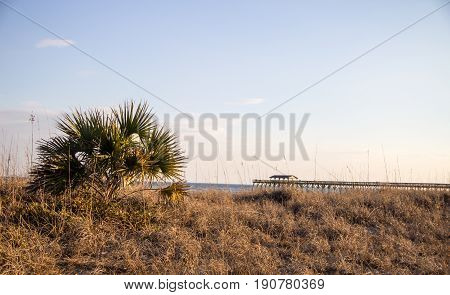 Myrtle Beach Coast Background. Dune grass beach with saw palmetto tree and wooden pier in the background on the Grand Strand Coast of Myrtle Beach, South Carolina.