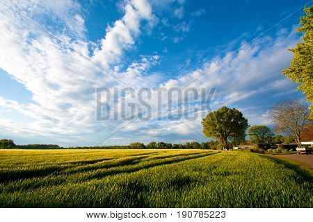 Summer field with green trees. Nature concept.