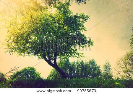 Retro grunge vintage tree at summer. Nature.
