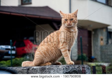 Cat on the wall staring on car