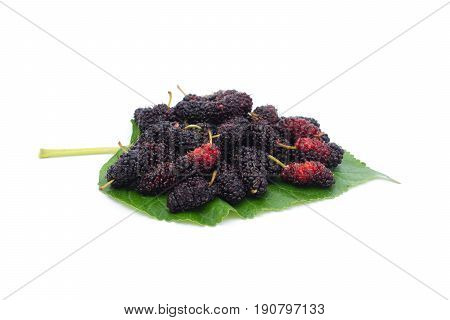mulberry on leaf isolated on white background