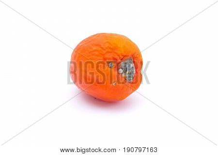 One rotten tomato isolated on white background