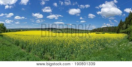 Yellow blooming canola field in a slightly hilly, rural landscape with blue and white sky