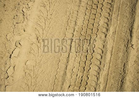 Trace Of The Wheels On A Yellow Sand . Sand Texture