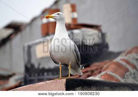 seagull topfloor roof city daytime morning bird