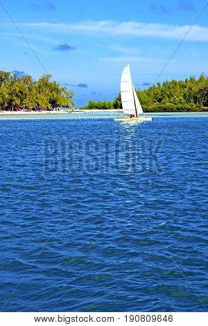 Beach Ile Du Cerfs Seaweed  Indian Sail