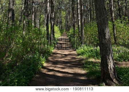 Path in the woods at noon in the spring.