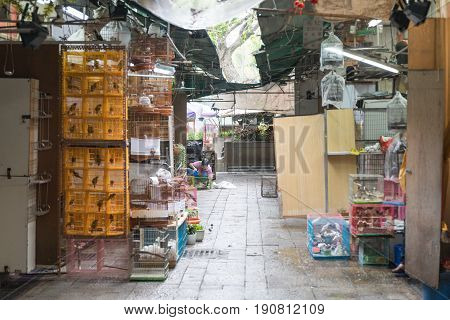 KOWLOON HONG KONG - APRIL 21 2017: Songbirds in Cages at Yuen Po Street Bird Garden in Kowloon Hong Kong.