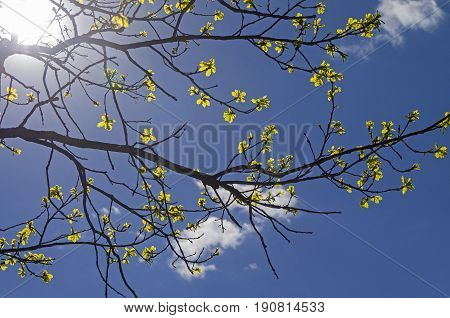 Oak branch with blossoming leaves against a bright blue spring sky.