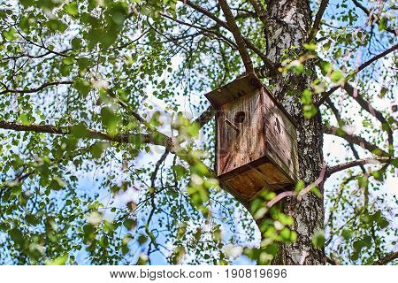 Wooden nesting-box attached to a birch tree