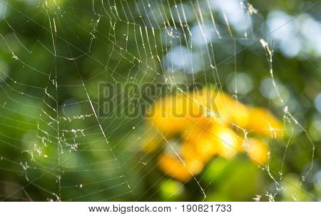 Background with spider net. Foreground focus on a spider net. Behind them is a flower pot with yellow flowers.