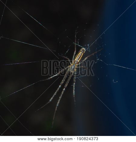 The spider sits on the web. You can see the abdomen and legs of a spider. Macro.