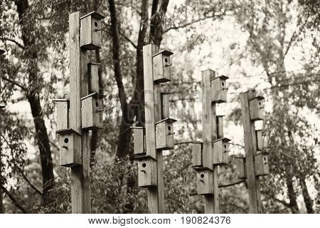 Vertical bird feeder city park bokeh background hd