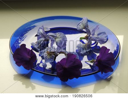 Flowers cut flowers buds irises blue plate shadow reflection color reflex  petal veins streaks