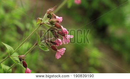 Bright wild flowers with drops of morning dew on lush green vegetation