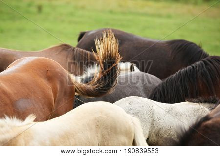 Nice Batch Of Horses Together