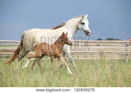 Amazing Foal With Its Mother