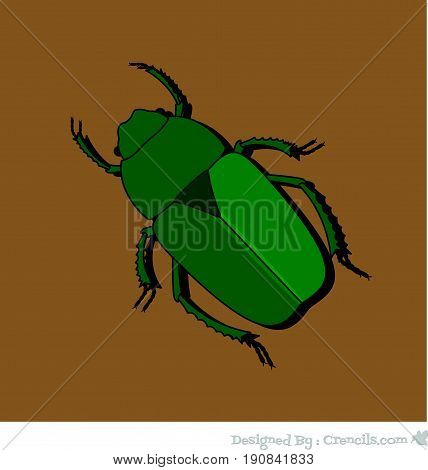 Green Beetle Insect - Vector Stock Illustration