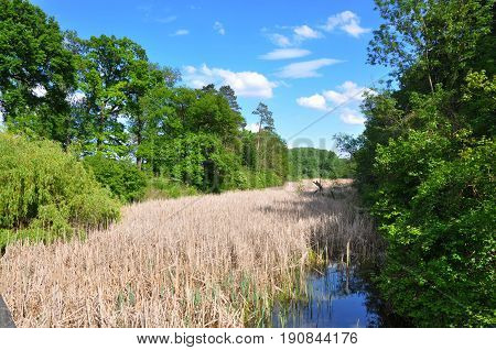 Donauauen austrian natural national park in Eckartsau park dry reeds in sunny day