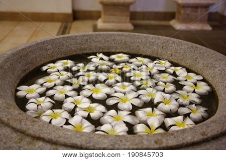 White and yellow plumeria flowers soaked in water Big pot filled with white plumeria flowers with yellow centers, floating in water
