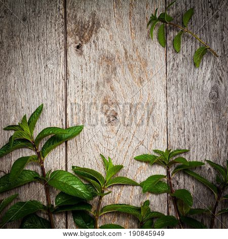 Fresh Mint on Old Wooden Background. Selective focus.