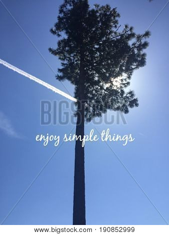 Inspirational white text on clear blue sky with tall pine tree and airplane line cloud isolated. Sunshine behind tree branches. Enjoy simple things.