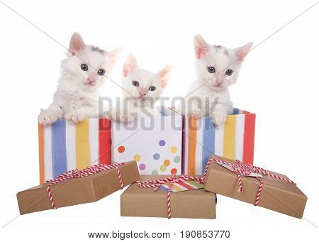 Three fuzzy white kittens sitting in decorative present boxes with polka dots and stripes soft pastel type colors with brown cardboard type box lids laying in front. Isolated on white background.