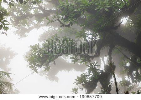 Lush foggy rainforest La Fortuna Costa Rica