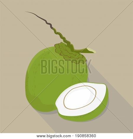 coconut isolated flat style, coconut icon isolated on background, coconut on a light Background, vector illustration.