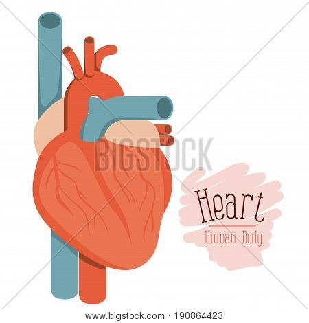 white background with colorful hearth system human body vector illustration