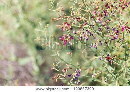 flowers on thorny plants in nature . A photo