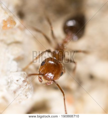 ant on the ground. Super Macro . A photo