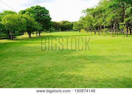 Garden with trees and sky and nature lanscape